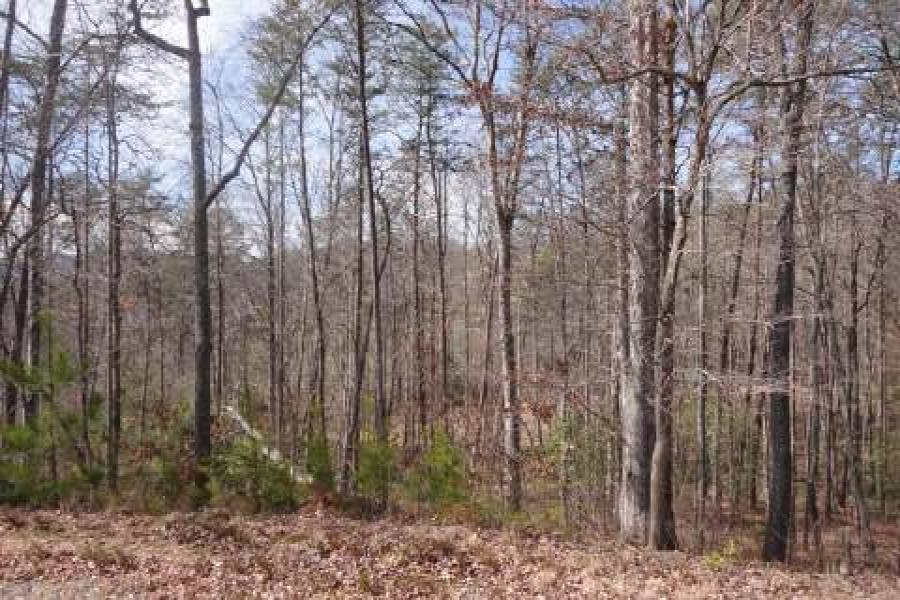 Georgia Mountain land for sale LT 54 ASHELAND COVE, Young Harris, Georgia 30582, ,Vacant lot,For sale,ASHELAND COVE,217356, land for sale Advantage Chatuge Realty