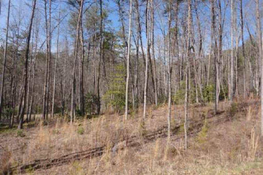 Georgia Mountain land for sale LT 59 ASHELAND COVE, Young Harris, Georgia 30582, ,Vacant lot,For sale,ASHELAND COVE,217361, land for sale Advantage Chatuge Realty