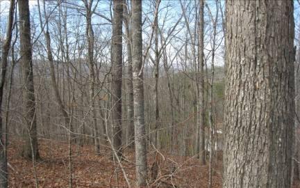 Georgia Mountain land for sale LOT25 SCARLETTS WAY, Young Harris, Georgia 30852, ,Vacant lot,For sale,SCARLETTS WAY,211200, land for sale Advantage Chatuge Realty